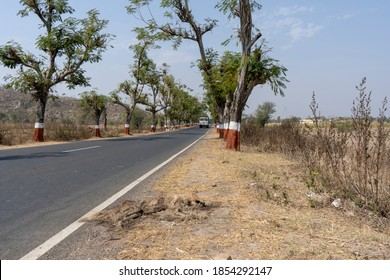Carcass of Indian Striped Hyena Roadkilled by vehicle, lying beside of road which passing through Forest. moving vehicles passing through road