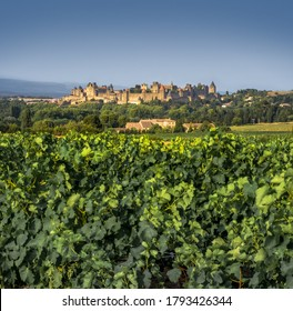 Carcassonne fortress, general view on defensive walls and towers of medieval citadel from the vineyard. Ancient european castles of France, architectural monument of UNESCO World Heritage.