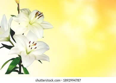 A card. Fresh white lily on a textured soft coloured background.