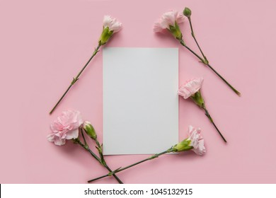 Card Mock up with pink flowers on a pink background. One flower alone. Top view. Space for text. Carnations Flat lay.