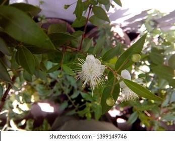 Cardamom Flower JPG file cardamom plant