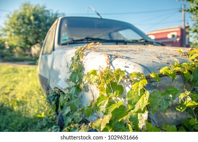 Cardan/ France - August 08 2013 : Creeper plant on a car