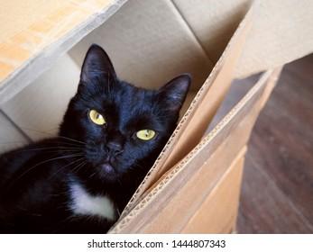 Imágenes, fotos de stock y vectores sobre Mail Pet