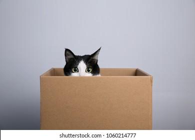 Karton mit Katze
