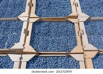 Cardboard boxes with plastic containers with fresh blueberries. Transportation of handpicked berries.