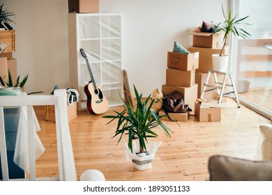 Cardboard boxes and potted plant on the floor of a new home on a moving day.