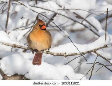 snow birds images stock photos vectors shutterstock