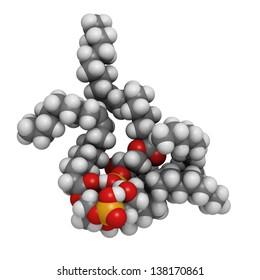 Cardiolipin (tetraoleoylcardiolipin) mitochondrial membrane lipid, molecular model. Atoms are represented as spheres with conventional color coding