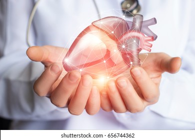 Cardiologist supports the heart of man hands.