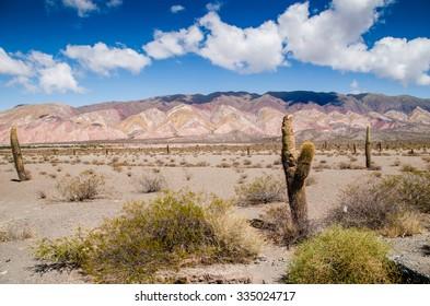Cardon - Cactus - Los Cardones - Salta Province - Argentina