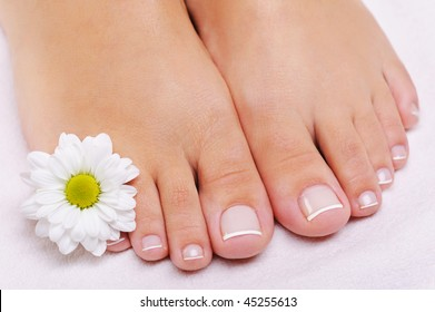 Care of a female feet with the French pedicure and flower. White camomile