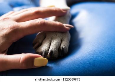 Care, human and dog paw