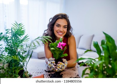 Care for a potted plant. Planting home plants indoors. Hands of a young woman planting in the flower pot. Woman potting some plants in pots on a counter at home.