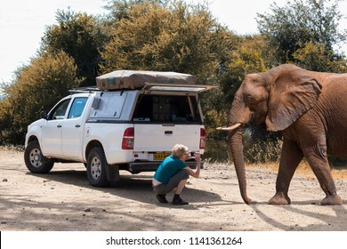 careless woman in front of her safari car taking a close-up picture of an elephant bull with her smartphone. Summer 2018, Mahango Game Reserve, Namibia, Africa