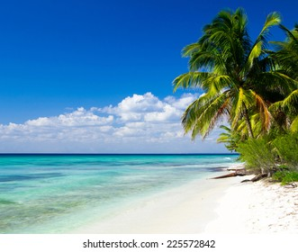 Caribbean Beach and Palm tree