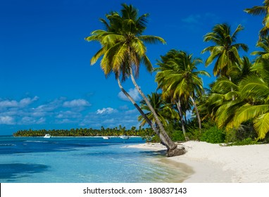 Caribbean beach with a lot of palms and white sand, Dominican Republic