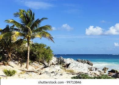 caribbean beach in summer in Mexico