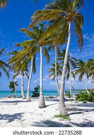 caribbean beach with white sand blue sky and many palm trees