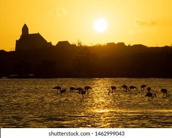 Caribbean Birding on the island of Curacao