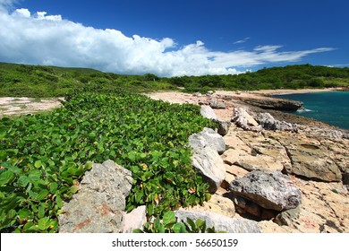 Caribbean coastline at Guanica Dry Forest Reserve in Puerto Rico.