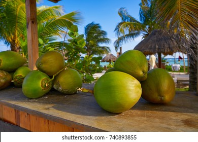 caribbean coconut fruits in Mayan Riviera of Mexico