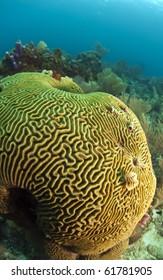 Caribbean coral reef off the coast of Roatan Honduras