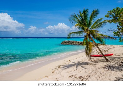 Caribbean Guadeloupe beach coconut