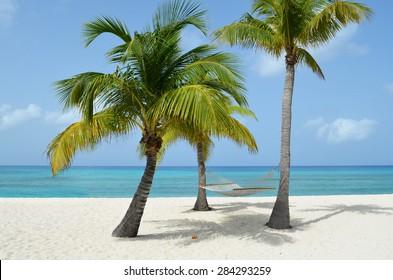 Caribbean hammock in the trees