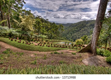 caribbean - Magnificent view from the mountains to the rain-forest and the sea on Martinique