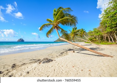 Caribbean Martinique beach coconut