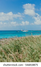 Caribbean ocean with beach grass in the front