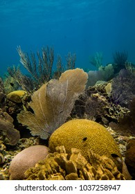 Caribbean reef with sea fan and brain coral
