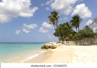 Caribbean Sand Beach and Palms, Barbados