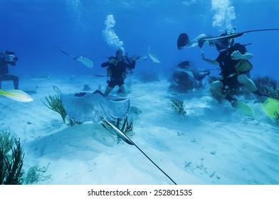 Caribbean Sea, Cayman Islands, Stingray City, divers and a stingrays - FILM SCAN