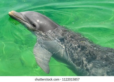Caribbean Sea, Cayo Largo del Sur, dolphin in the sea