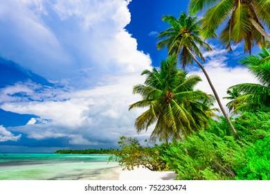 Caribbean Sea coast white sand resort beach palm tree Dominican Republic