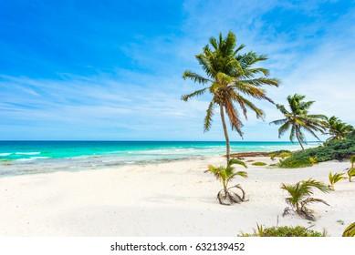 Caribbean sea in Mexico - Riviera Maya - Paradise beach with beautiful palm trees