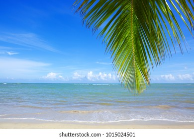 Caribbean sea and palm leaves background.