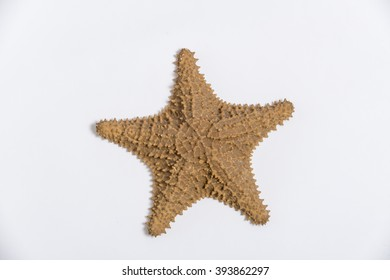 The caribbean starfish isolated on white background, view from the top