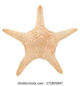The caribbean starfish on a white background