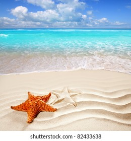 Caribbean starfish over wavy white sand beach such a summer vacation [Photo Illustration]