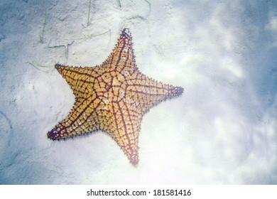 Caribbean Starfish Underwater in so called Natural Pool of Bayahibe near Saona Island in Dominican Republic. National Park Guaraguao.