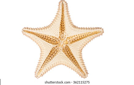 Caribbean starfish upside down, cleaned up isolated on white background