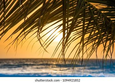 Caribbean sunset through a palm tree leaf in the Eagle Beach, Aruba.