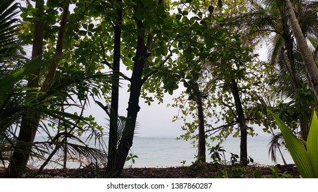 caribe landscape with sea and trees