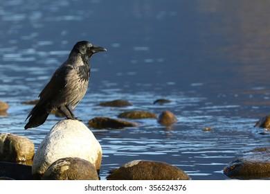 Carillion crow
