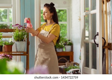 Caring of every one. Concentrated florist sprinkling with water plants on the shelve stand outside her shop.
