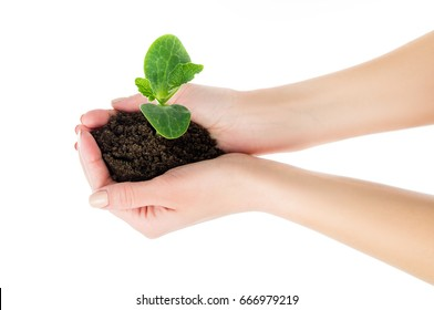 Caring, the girl is holding a seedling