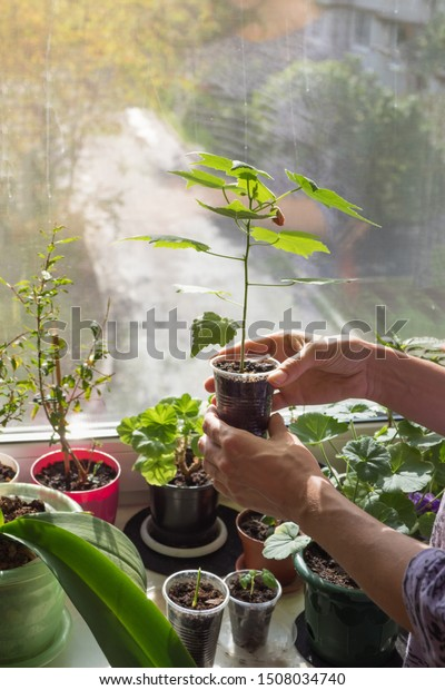 Caring Houseplants Woman Taking Care Houseplant Stock Photo ... on tall slim plants, talking plants, positive energy plants, respecting plants, sharing plants, awesome plants, most important plants, detailed plants, creative plants, england plants, strong plants, balanced plants, resilient plants, learning plants, meaningful plants, peaceful plants, tough plants, protecting plants, friendly plants, loving plants,