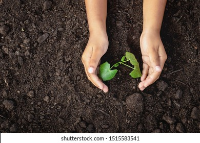 Caring for small green trees in hand - Shutterstock ID 1515583541